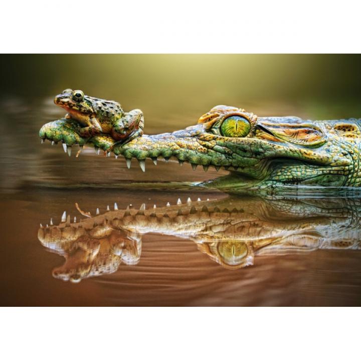 Пазл Крокодил 500 деталей Castorland B-52318